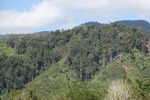 Deforestation outside of Manokwari [west-papua_5228]