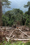 Smallholder deforestation in the Arfak mountains