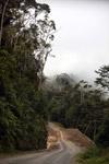 New Guinea road
