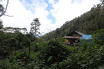 Birdwatching hut in West Papua