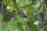 Bird [west-papua_5840]