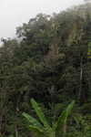 Tropical forest in New Guinea [west-papua_5903]