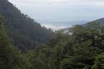 Arfak forest [west-papua_6016]