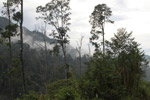 Arfak forest [west-papua_6025]