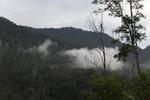 Arfak forest [west-papua_6030]