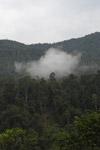 Arfak forest [west-papua_6043]