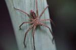 Spider [west-papua_6256]