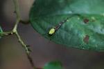 Spider [west-papua_6321]