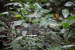 Convex spider web