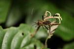 Metallic bug