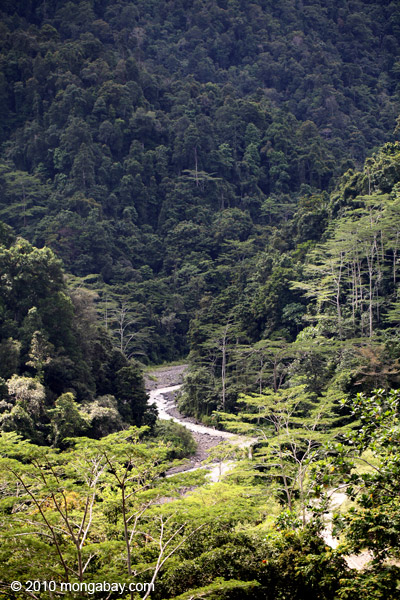 Rainforest in West Papua (formerly Irian Jaya), in Indonesian New Guinea