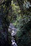 Rainforest creek in Manu