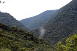 Kosnipata Valley cloud forest