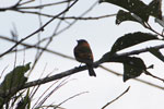 Bird [manu_0113]