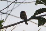 Bird [manu_0115]