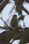 Bird [manu_0136]