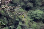 Parrot [manu_0329]