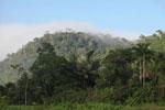 Amazon rainforest profile [manu_0460]
