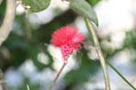 Red flower [manu_0573]