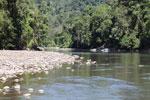 Rainforest river in the Amazon basin [manu_0795]