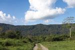 Rainforest near Villa Carmen [manu_0867]