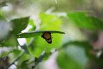 Butterfly [manu_0896]