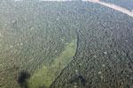 Rainforest cleared for cattle pasture in Peru