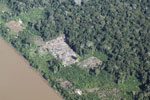 Aerial picture of cattle pasture cleared along a river in Peru's Madre de Dios Department