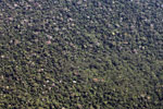 Aerial view of dense 'broccoli forest' amid rainforest in the Amazon