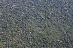 Airplane view of dense 'broccoli forest' amid rainforest in the Amazon