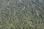 Aerial picture of the broccoli-like structure of the Amazon rainforest canopy