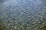Amazon rainforest canopy [peru_aerial_0615]