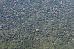 Aerial photograph of Broccoli forest