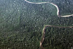 Overhead view of the rainforest canopy in Peru's Western Amazon
