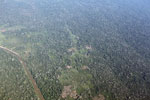 Aerial photo of mosaic deforestation in the Peruvian Amazon