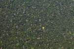Yellow flowering tree in the Amazon rainforest