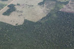 Large-scale deforestation for cattle ranching in the Peruvian Amazon