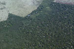 Aerial picture of large-scale deforestation for cattle pasture in the Peruvian Amazon
