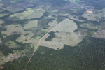 Aerial picture of large-scale forest clearing for cattle ranching in the Peruvian Amazon