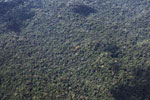 Amazon canopy [peru_aerial_1612]