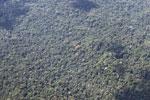 Amazon canopy [peru_aerial_1613]