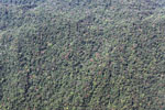 Flowering trees in the submontane forest of the Amazon basin [peru_aerial_1637]