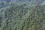 High biodiversity submontane forest of the Amazon basin