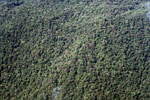 High conservation value submontane forest of the Amazon basin