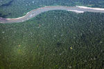 Airplane view of Amazon basin forest