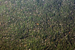 Looking down from an airplane at the rain forest of the Amazon basin