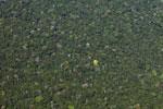 Looking down at Amazon basin rainforest