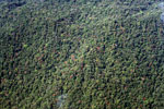 Aerial picture of forest in the Amazon basin