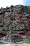 Lichen or moss growing on a cliff face [wayquecha-andes_0049]