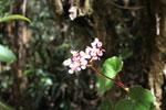 Flowers [wayquecha-andes_0212]